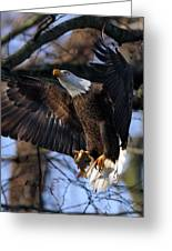 Bald Eagle Greeting Card by Angel Cher