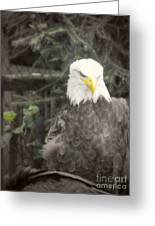 Bald Eagle Greeting Card by Dawn Gari