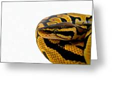Ball Python Greeting Card by Ed  Cheremet