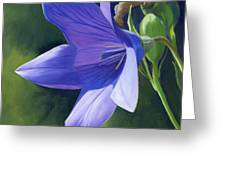 Balloon Flower Greeting Card by Alecia Underhill