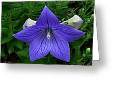 Balloon Flower Greeting Card by Julie Dant