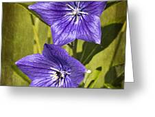 Balloon Flower Greeting Card by Marcia Colelli