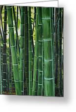 Bamboo Greeting Card by Chikako Hashimoto Lichnowsky