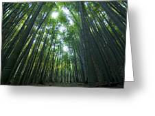 Bamboo Forest Greeting Card by Aaron S Bedell