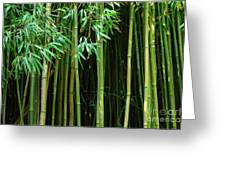 Bamboo Forest Maui Greeting Card by Bob Christopher