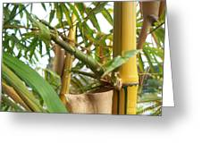 Bamboo Greeting Card by Heather Duncan