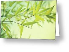 bamboo in the sun Greeting Card by Priska Wettstein