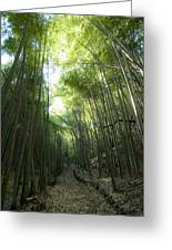 Bamboo Road Greeting Card by Aaron S Bedell