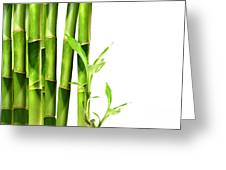 Bamboo Shoots Stacked Side By Side Greeting Card by Sandra Cunningham