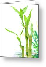 Bamboo Stems And Leaves Greeting Card by Olivier Le Queinec
