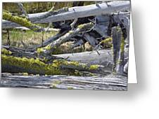 Bare Logs And Lichen In Yellowstone Greeting Card by Bruce Gourley