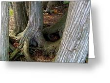 Barky Barky Trees Greeting Card by Michelle Calkins