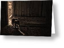 Barn Cat Greeting Card by Theresa Tahara