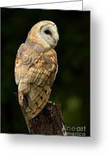 Barn Owl At Twilight Greeting Card by Inspired Nature Photography By Shelley Myke