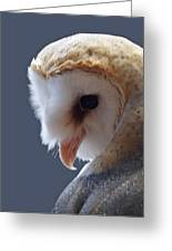 Barn Owl Dry Brushed Greeting Card by Ernie Echols