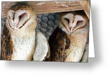 Barn Owls Greeting Card by David Yunker