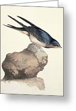 Barn Swallow, 19th Century Greeting Card by Science Photo Library