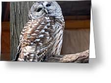 Barred Owl 264 Greeting Card by Joyce StJames