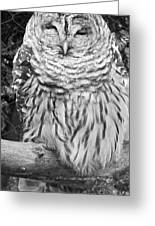 Barred Owl In Black And White Greeting Card by John Telfer