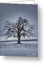 Barren Winter Scene With Tree Greeting Card by Dan Friend