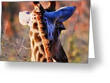 Bashful Giraffe  Greeting Card by Alexandra Jordankova