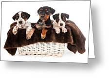 Basket Of Rottweiler Mixed Breed Puppies Greeting Card by Susan  Schmitz
