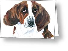 Basset Hound Portrait Greeting Card by Barb Capeletti