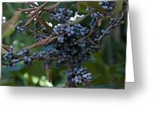 Bayberry Greeting Card by Michael Friedman