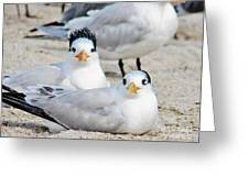 Beach Bird Hairdo Greeting Card by Judy Via-Wolff