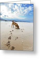 Beach Dog Greeting Card by Eldad Carin
