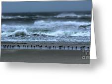 Beach Feast - Outer Banks Ocracoke Greeting Card by Dan Carmichael