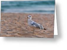 Beach Patrol Greeting Card by Sebastian Musial
