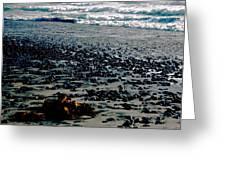 Beach Pebbles with Seaweed   Greeting Card by Gilbert Artiaga