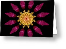 Beach Rose Iv Flower Mandala Greeting Card by David J Bookbinder