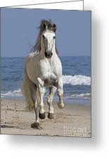 Beach Run Greeting Card by Carol Walker