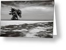 Beach Tree Greeting Card by Dave Bowman