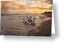 Beached Beauty Greeting Card by Betsy A  Cutler