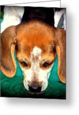 Beagle Puppy 3 Greeting Card by Lynn Griffin