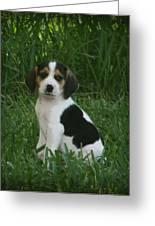 Beagle Puppy 4 Greeting Card by Lynn Griffin