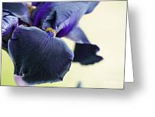 Bearded Iris Interpol Greeting Card by Tim Gainey