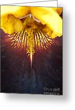 Bearded Iris 'supreme Sultan' Greeting Card by Tim Gainey