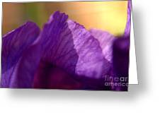 Bearded Iris Undulations Greeting Card by Anna Lisa Yoder