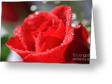 Beautiful as a Rose Greeting Card by Cheryl Young