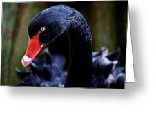 Beautiful Black Swan Greeting Card by Paulette Thomas