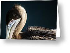 Beautiful Brown Pelican Greeting Card by Paulette Thomas