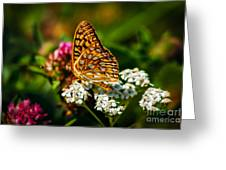 Beautiful Butterfly Greeting Card by Robert Bales