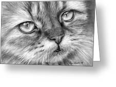 Beautiful Cat Greeting Card by Olga Shvartsur
