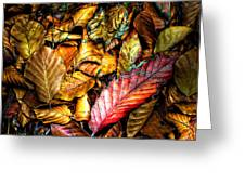 Beautiful Fall Color Greeting Card by Meirion Matthias
