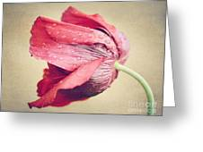 Beautiful Flower Greeting Card by Diana Kraleva