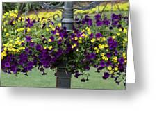 Beautiful Hanging Flowers Greeting Card by Sabrina L Ryan